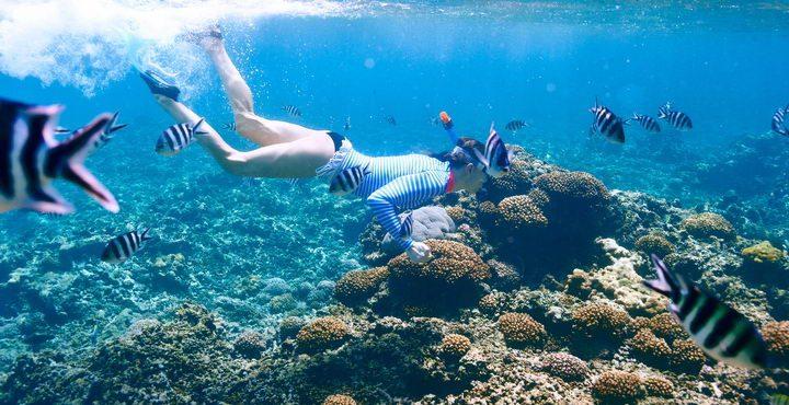 ספארי צלילה במלדיבים
