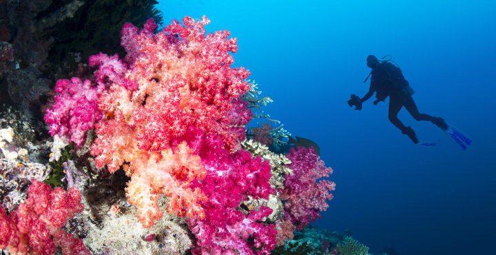 חווית צלילה וגלישה באיים המלדיביים